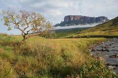 Una vista della montagna del Roraima nel Venezuela Fotografia Stock