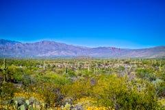 Una vista della siluetta delle montagne di Rincon nel parco nazionale del saguaro, Arizona immagine stock