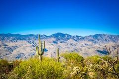 Una vista della siluetta delle montagne di Rincon nel parco nazionale del saguaro, Arizona fotografia stock