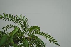 Una vista della struttura e dei modelli frondosi davanti ad una parete bianca fotografie stock