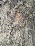 Una vista dettagliata del tronco di albero per fondo Immagini Stock Libere da Diritti