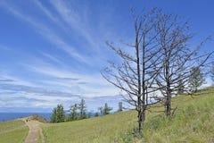 Una vista di due alberi contro il cielo blu Fotografie Stock