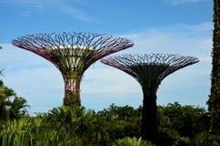 Una vista di due Supertrees artificiale ai giardini dalla baia Singapore Immagini Stock Libere da Diritti