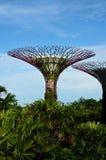 Una vista di due Supertrees artificiale ai giardini dalla baia Singapore Fotografie Stock Libere da Diritti