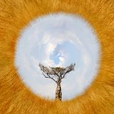 una vista di 360 gradi di paesaggio con l'albero in Africa Fotografia Stock