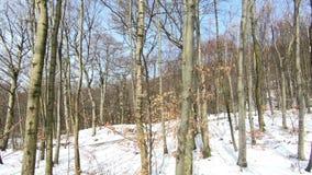 Una vista di inverno attraverso il terreno boscoso innevato a Salisburgo stock footage