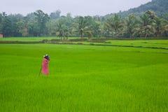 Una vista di risaia fuggita Fotografia Stock Libera da Diritti