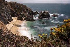 Una vista di una spiaggia nel punto Reyes National Park, la California, ginestrone incornicia la vista alla spiaggia immagini stock