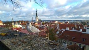 Una vista di Tallinn, Estonia immagini stock libere da diritti