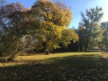 Una vista di un parco in autunno Fotografia Stock Libera da Diritti