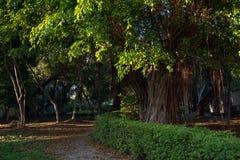 Una vista di un parco verde Fotografia Stock