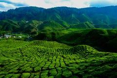 Una vista facinating alla piantagione di tè in Cameron Highland Fotografia Stock