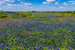 Una vista granangular hermosa de una manta gruesa de Texas Bluebonnets en Texas Country Meadow con los cielos azules. Fotografía de archivo libre de regalías
