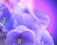 Una vista lateral de algunas flores púrpuras, rosadas, y azules hermosas Fotos de archivo