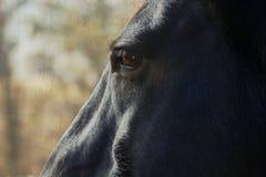 Una vista laterale di un cavallo. Immagine Stock