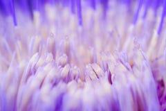 Una vista macra de los pétalos de la flor de la alcachofa fotos de archivo libres de regalías