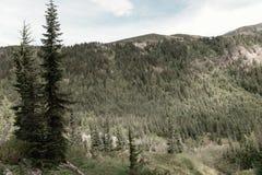 Una vista nella foresta Immagini Stock
