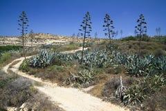 Una vista parziale della zona selvaggia di Malta Fotografia Stock