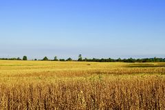 Una vista piacevole dei campi canadesi sopra E Giorno in anticipo di autunno fotografia stock libera da diritti