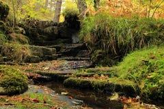 Una vista piacevole di una foresta Fotografie Stock Libere da Diritti