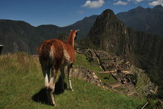 Una vista sopra Machu Picchu Fotografie Stock