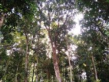 una vista sotto un albero ombreggiato fotografia stock libera da diritti