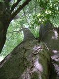 Una vista su negli alberi Fotografie Stock