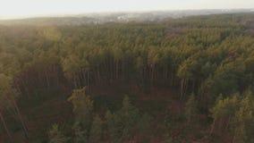 Una vista superior del landskape del bosque El quadcopter vuela sobre el tiroteo conífero del bosque del abejón almacen de video