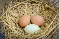 Una vista superiore di tre uova Immagini Stock