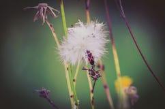 Una vita degli insetti Fotografie Stock