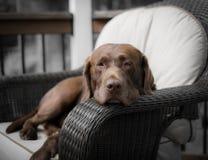 Una vita dei cani Immagini Stock Libere da Diritti