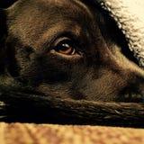 Una vita dei cani Immagine Stock