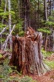 Una vita del ` s dell'albero nella foresta fotografia stock libera da diritti