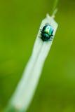 Una vita dell'insetto Fotografia Stock