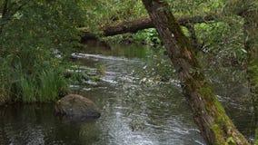 Una vuelta del río con las corrientes y cantos rodados y un árbol caido a través de él en Europa almacen de metraje de vídeo