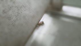 Una zampa di cane rivelata sul pavimento della toilette pubblica La gamba proviene dal cane cui venga alla toilette seguente per  Fotografia Stock