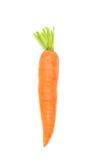 Una zanahoria fresca Imagen de archivo