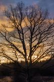 una zona rurale con una grande quercia senza foglie fotografie stock