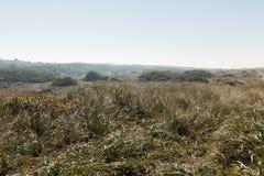 Una zona verde en el ambiente natural de las dunas de Oregon, los E.E.U.U. fotografía de archivo