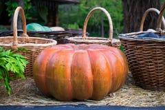 Una zucca arancio festiva per Halloween dalla raccolta dei raccolti freschi dal giardino si trova nel fieno fra il baske tessuto Fotografia Stock