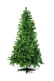 Unadorned Christmas tree Royalty Free Stock Photography