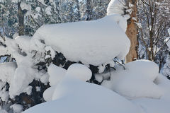 The unaffected sculpture snow on the winter forest Stock Photography