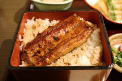 Unagi (geräucherter Aal) auf Reis mit indischem Sesam und Ingwer Lizenzfreies Stockfoto