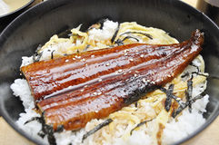 Unagi with rice. Recent had meal at a Japanese restaurant, ordered this Unagi (eel) with rice. It also serve with egg and seaweed royalty free stock photos