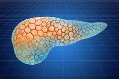 Unaocznienia 3d chama model ludzka trzustka, 3D rendering ilustracja wektor