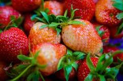 Unausgereifte Erdbeere stockfotografie