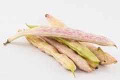 Unausgereifter gemeine Bohnen Phaseolus vulgaris Stockbild