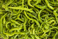 Unausgereifter grüner Paprika Stockbild