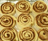 Unbaked cinnamon rolled bun. With sugar and pecan nuts stock image