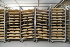 Unbaked loaves of bread in a proofing room royalty free stock photo